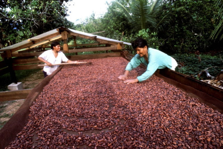 [:es]El sector cacaotero generaría $ 3.000 millones hasta 2025[:en]The cocoa industry will generate up to $3.000 million by 2025[:]